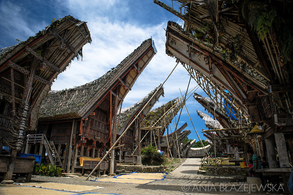 Indonesia, Sulawesi, Tana Toraja. Palawa - traditional Torajan village.<br /> <br /> Tana Toraja, situated in the south of Sulawesi, sometimes reminds alive museum full of traditional boat-shaped houses painted with Torajan patterns, burial caves or hanging graves guarded by tau tau (a deceased shaped wooden sculptures(, all of them situated in a beautiful scenery of green rice terraces.