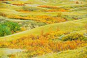 autumn on the prairie<br /> Saskatchewan Landing Provincial Park<br /> Saskatchewan<br /> Canada