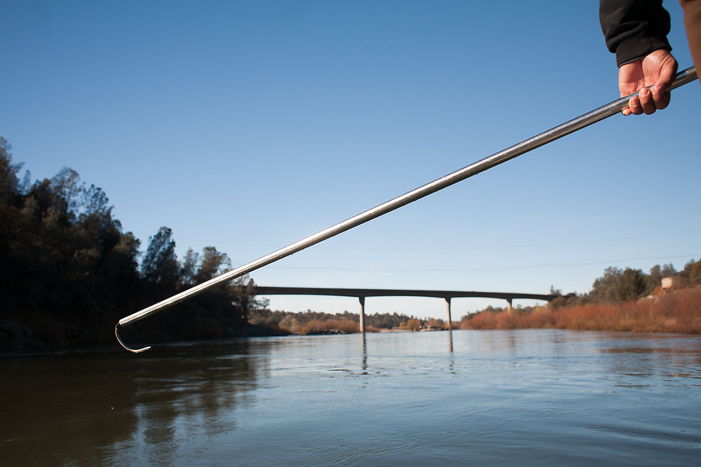 A steel pole with a curved hook is used by biologists with the Yuba River Management Team to snag salmon carcasses as they drift downstream.  Salmon die after spawning. December 07, 2010.