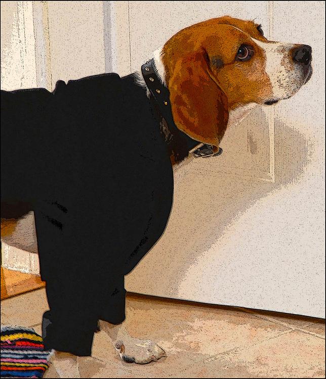 Wedding Beagle / Catalog #223
