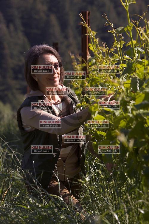 Winemaker Marimar Torres  inspects her grapes at her newest Dona Margarita Vineyard near Freestone, Calif (Sonoma County).  --Photo by Kim Kulish