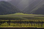 Vines ~ Santa Lucia Highlands AVA