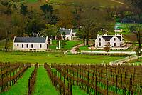 Vineyards, Banhoek Vineyard Lodge, near Stellenbosch (Cape Town area), South Africa