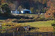 Otisville, New York  - Horses and Canada geese in the fields at Hidden Lake Farm on Oct. 12, 2014.