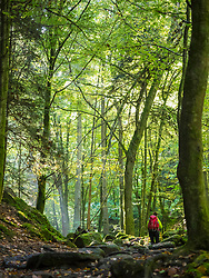 Woman on hiking tour in the Northern Black Forest, Monbachtal, Bad Liebenzell, Baden-Württemberg, Germany