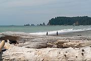 People enjoy Rialto Beach, Olympic National Park, Washington, USA.