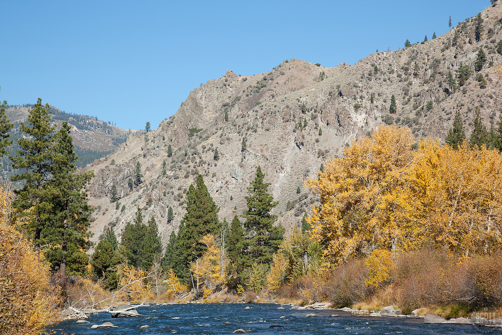 """""""Truckee River in Autumn 7"""" - Photograph of the Truckee River, a mountain, pine trees  and yellow leaved cottonwood trees in Autumn."""