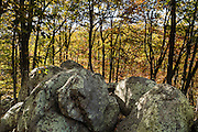 Indian Rocks, fall foliage color in mid October. Walk 0.3 miles to the impressive boulders of Indian Rocks from Indian Gap Parking Area (Milepost 47.5, elevation 2098 feet) on Blue Ridge Parkway, in Virginia, in the Blue Ridge Mountains (a subset of the Appalachian Mountains), USA. The scenic 469-mile Blue Ridge Parkway was built 1935-1987 to aesthetically connect Shenandoah National Park (in Virginia) with Great Smoky Mountains National Park in North Carolina, following crestlines and the Appalachian Trail.
