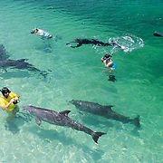 Bottlenose Dolphin (Tursiops truncatus).  Tourists at the Institute of Marine Sciences in Roatan,  Honduras.  Captive Animal.