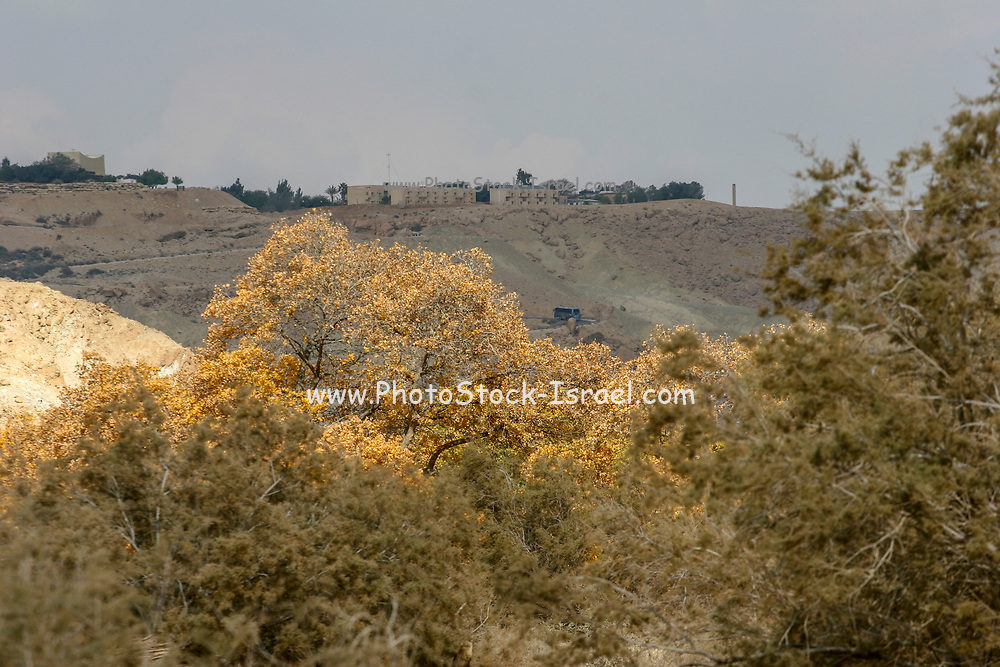 Israel, Negev, looking out towards Ein Ovdat and the Wadi Zin valley