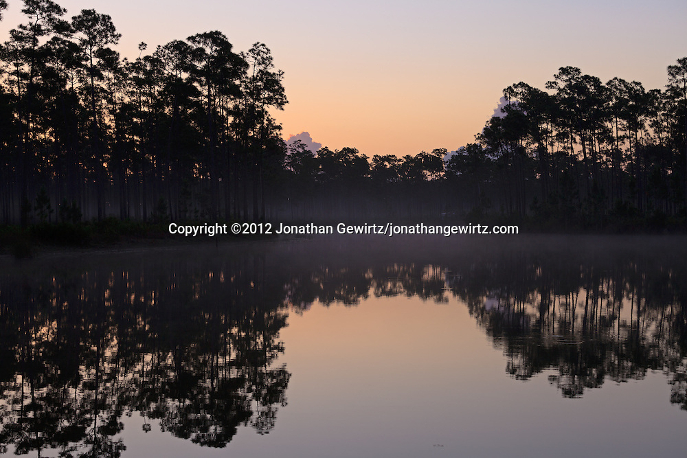 The sky brightens above morning fog around the pond at Long Pine Key campground in Everglades National Park, Florida. WATERMARKS WILL NOT APPEAR ON PRINTS OR LICENSED IMAGES.
