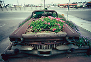 San Diego,CA 1982/04/01An old Cadillac  taking a parking space.  <br />Photo by Dennis Brack