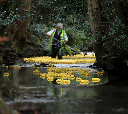 © Licensed to London News Pictures. 26/12/2011. KENILWORTH, UK.  People enjoy the annual Boxing Day Duck race in Kenilworth today.  With over 1500 plastic ducks entered in the race the entrants gather to cheer on the 'swim off' as the ducks float down a 300 yard stretch of a local brook.  Photo credit: Alison Baskerville/LNP