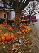 Roadside farm selling pumpkins, northern Ohio.
