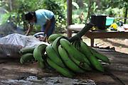 Local Ngäbe women prepare lunch for a COCABO members meeting. COCABO: Valle de Agua Arriba, Almirante, Changuinola, Bocas del Toro, Panamá. September 1, 2012.