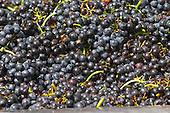 Bourgogne Beaujolais Domaine Tracot Dubost stock photo samples