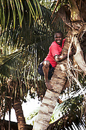 Man on top of a coconut tree