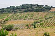 Vineyard. Domaine Gauby, Calces, roussillon, France