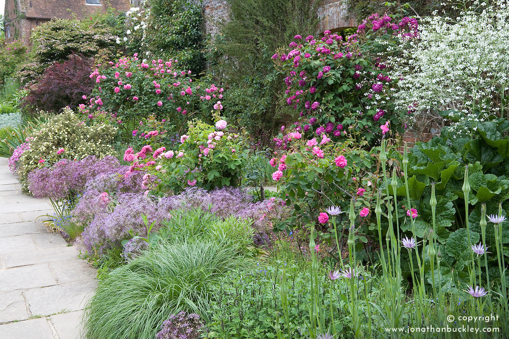 Allium cristophii syn. A. christophii with roses in the borders at Sissinghurst Castle Garden