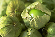 Close up, selective focus photograph of Tomatillos