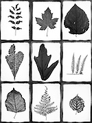 collage with various leaves