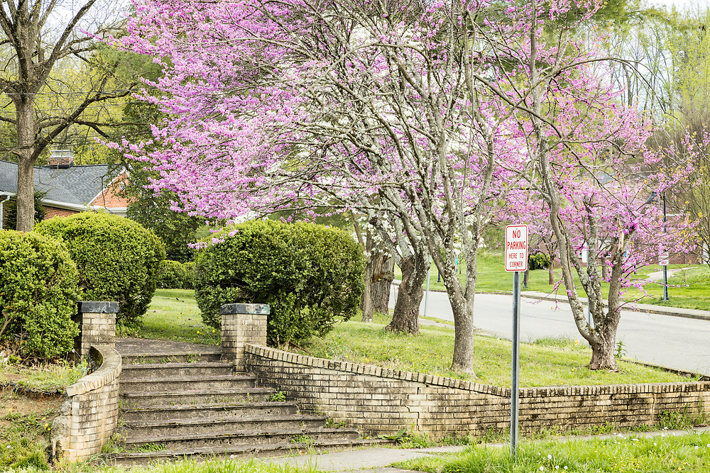 Tree Streets Spring