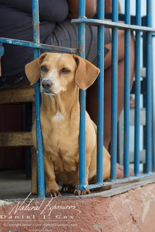 A small dog, Trinidad, Cuba.