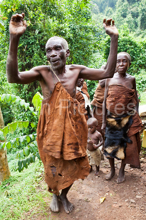 James, one of the elders of the traditional Batwa pygmies from the Bwindi Impenetrable Forest in Uganda dancing when visitors arrive at the village. Batwa tribes people were indigenous forest nomads before they were evicted from the Bwindi Impenetrable Forest when it was made a World Heritage site to protect the mountain gorillas. The Batwa Development Program now supports them.