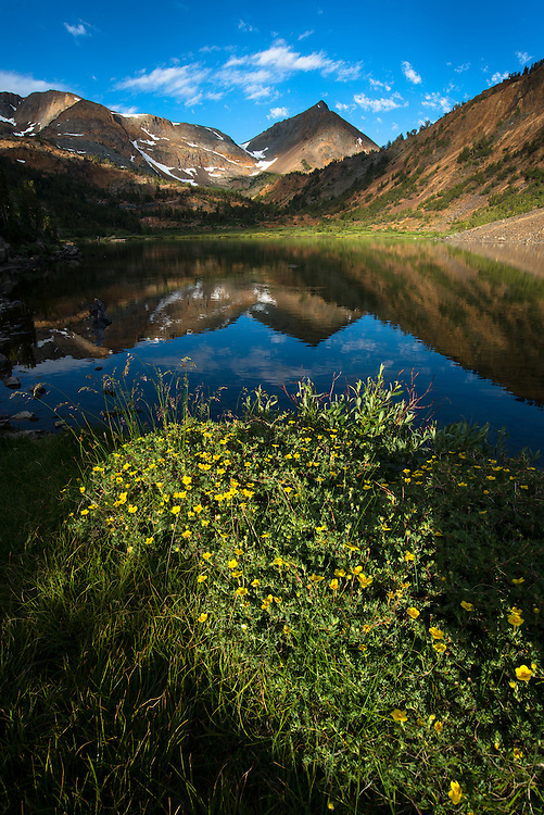 """Sunrise over Hoover Lakes, Hoover Wilderness, Eastern Sierra. """"Potentilla Fruticosa"""" in foreground."""