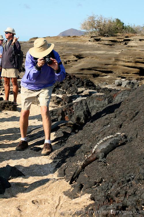 South America, Ecuador, Galapagos Islands, Santiago Island, James Island, Port Egas. A photographer gets his iguana picture.
