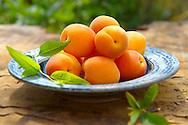 Whole fresh apricots
