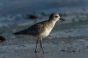 Wildlife Bird Images from the beaches at Santa Barbara, California