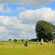 Neolithic Stones And Lone Tree- Avebury, UK