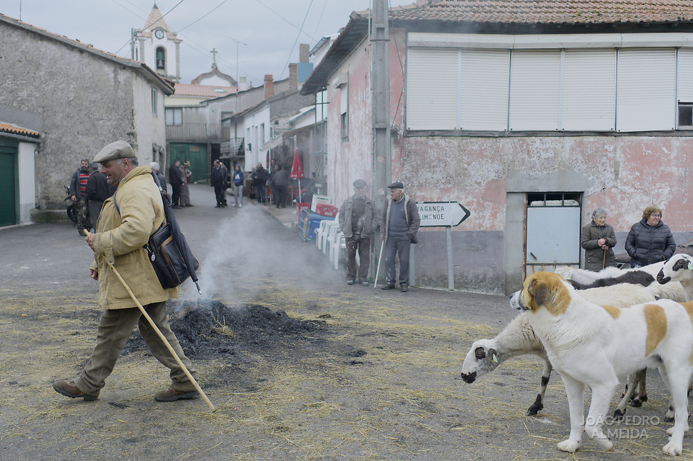 Sheperd with his dog leading his herd through the middle of the village