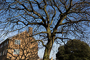 The shadows of winter branches of an old oak tree, once standing in the garden of Victorian industrialist Henry Bessemer, in the borough of Southwark, on 24th February 2018, in south London, England.