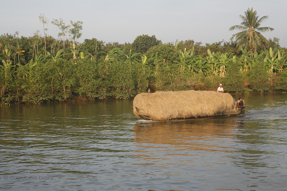 A bank of the first arm (Tien Giang) of the river Mekong..March 18th 2007.