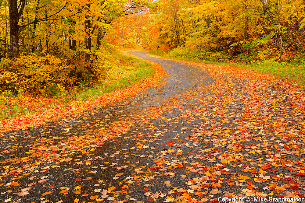 Country road lined with fallen maple leaves in autumn<br /> Goulasi River<br /> Ontario<br /> Canada