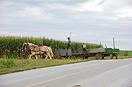 UNITED STATES-LANCASTER COUNTY-A farmer reaping corn the oldfashioned way. PHOTO GERRIT DE HEUS. VERENIGDE STATEN-LANCASTER COUNTY-Een boer uit de Amish-gemeenschap oogst mais op traditionele wijze. PHOTO COPYRIGHT GERRIT DE HEUS