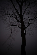 Tree Winter Ringstrasse Vienna,Photos entered in Head on Photo Festival by Paul Green. These are a selection of images entered to the Landscape and Portrait Prizes between 2012 and 2015.