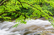 66745-04519 Middle Prong Little River in spring Great Smoky Mountains National Park TN