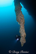 diver and giant stalactite in the Blue Hole at depth of 130 feet, Lighthouse Reef Atoll, Belize, Central America  ( Caribbean Sea ) MR 316