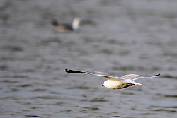 Sea Gull<br /> Jumping International de La Baule 2019<br /> © Hippo Foto - Dirk Caremans<br /> 17/05/2019