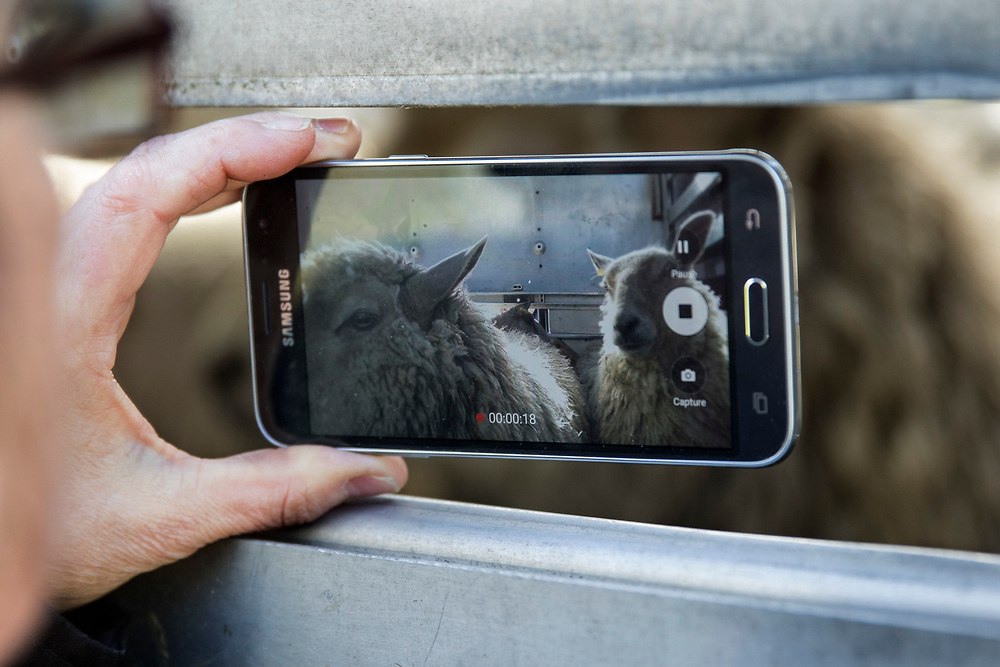 """South Wales Animal Save held a vigil outside a slaughterhouse to """"bear witness"""" to the end of animals lives. They film and photograph the animals and circulate the images through social media to """"introduce people to the invisible victims of the meat and dairy trade"""""""