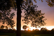 Setting sun over 100 year-old mature ash trees in Ruskin Park in the borough of Lambeth, south London.
