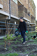 Tenants and volunteers during a community planting day for Lambeths biggest rain garden project organised by Cressingham Gardens tenant Nicolas Greaves and London Wildlife Trust on 18th April 2015 in South London, United Kingdom. Cressingham Gardens is a council garden estate, located on the southern edge of Brockwell Park. It comprises of 306 dwellings and built to the design of Lambeth Borough Council architect Edward Hollamby in the early 1970s. In 2012, Lambeth Council proposed regeneration of the estate, a decision highly opposed by many residents. Since the announcement, the highly motivated campaign group Save Cressingham Gardens has been active.