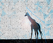 Digitally enhanced image of a silhouette of full body shot of a adult giraffe