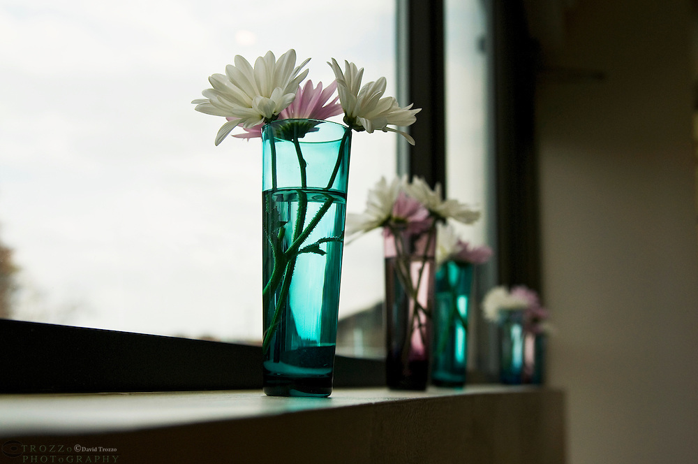 Dasies in a vases