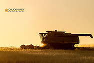 Wheat harvest at sunset in the Flathead Valley, Montana, USA