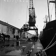 "16/01/1960<br /> 01/16/1960<br /> 16 January 1960<br /> Horses for slaughter being loaded for export to the Netherlands from Dublin. Crane loading horses onto the ""City of Waterford""."