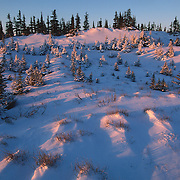 Late evening light showers a Black Spruce forest near Hudson Bay, Manitoba, Canada.